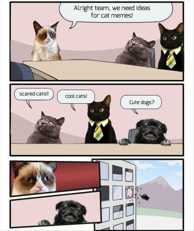 Alright Team We Need Cat Meme Cat Planet Cat Planet