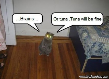 Funny Zombie Memes : Brains or tuna cat meme cat planet cat planet