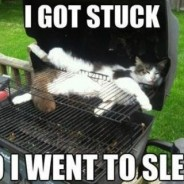 I Got Stuck in BBQ Cat Meme