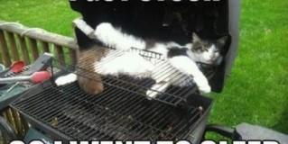 I Got Stuck in BBQ Cat Meme