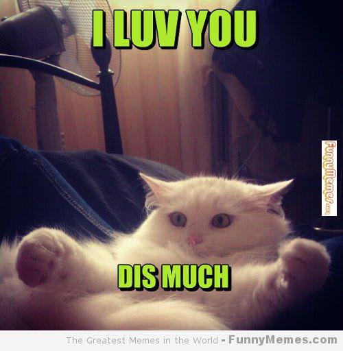 i love you this much cute meme - photo #13