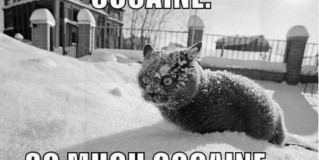 Cocaine Cat Meme
