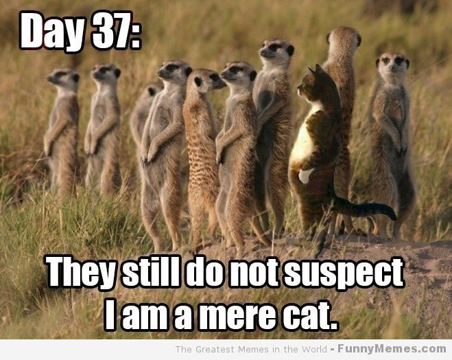 Day 37 day 37 cat meme cat planet cat planet