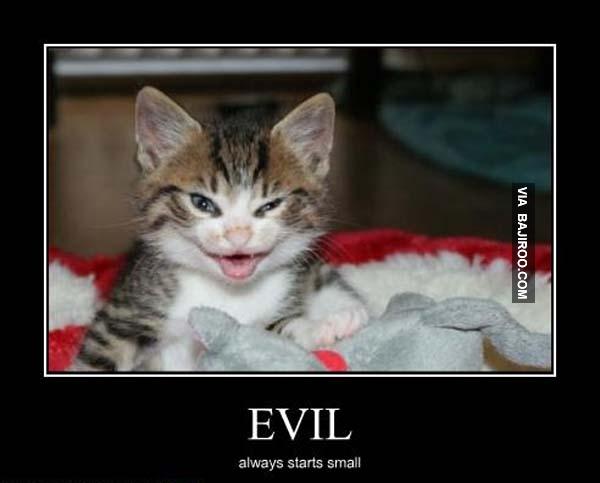 Evil Cat Pictures 74