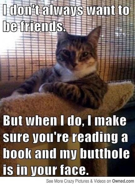 I Don't Always Want Cat Meme - Cat Planet   Cat Planet