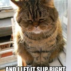 Jesus Cat Has No Interest In Physics Meme