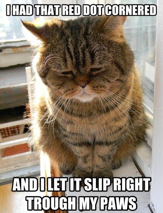 I Had That Red Dot Cornered Cat Meme Cat Planet Cat Planet