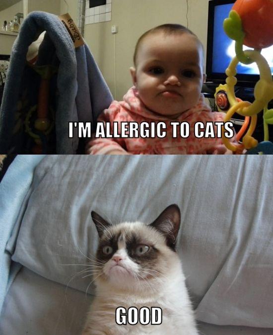 Im allergic to cat i'm allergic to cat meme cat planet cat planet