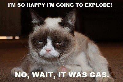 Im so happy i'm so happy cat meme cat planet cat planet