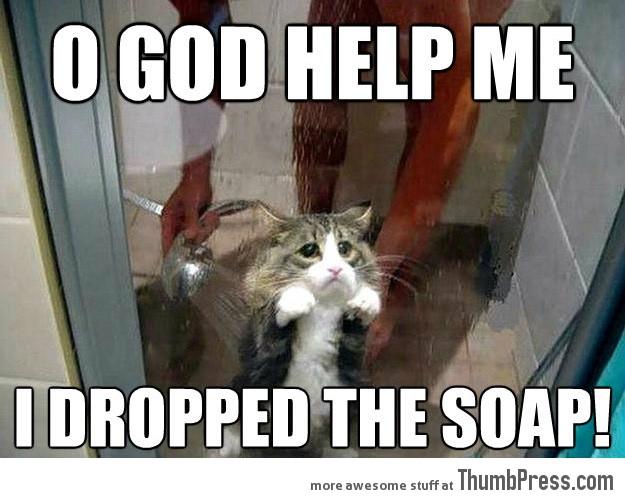Funny Meme For Adults : O god help me cat meme cat planet cat planet