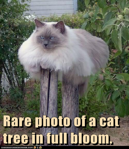 Rare-photo-of-Cat-Tree.png