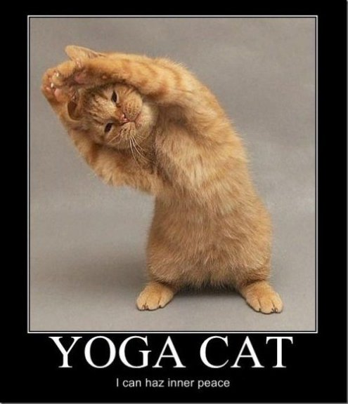Yoga Cat Meme