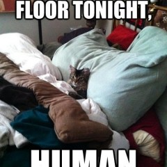 You Sleep On Floor Tonight Cat Meme