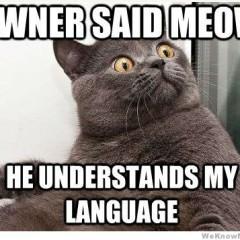 Owner Said Meow Cat Meme