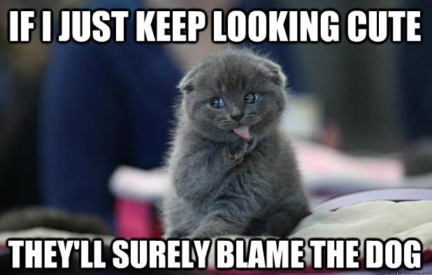If I Just Keep Looking Cute Cat Meme Cat Planet Cat Planet
