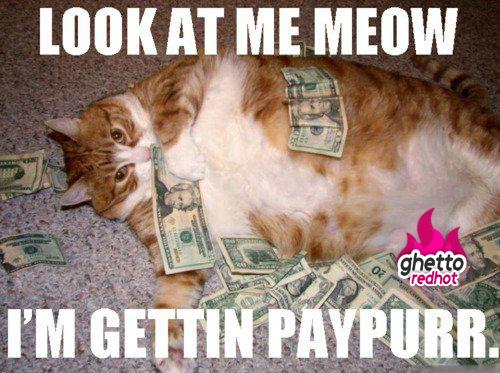 look at me meow cat meme cat planet cat planet. Black Bedroom Furniture Sets. Home Design Ideas