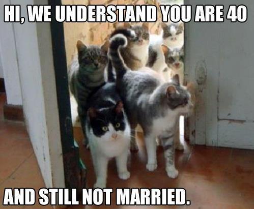 we understand you are 40 hi, we understand you are 40 cat meme cat planet cat planet