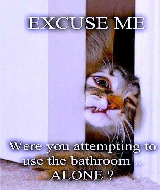 Excuse Me Cat Meme Cat Planet Cat Planet