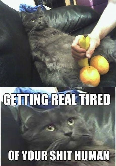 Getting real tired getting real tired cat meme cat planet cat planet