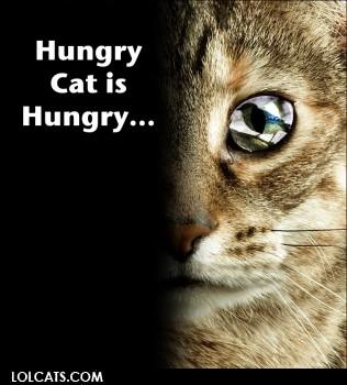 Hungry cat is hungry hungry cat is hungry cat meme cat planet cat planet