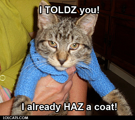 Image result for cold monday cat images
