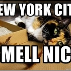 New york city 240x240 funny cat memes archives page 909 of 983 cat planet cat planet
