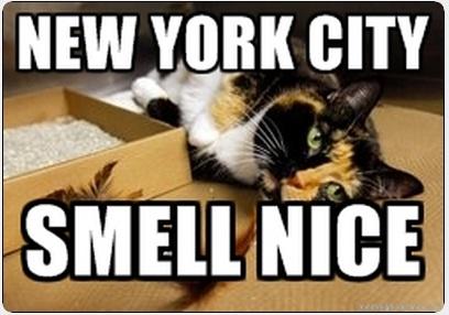 New York City Cat Meme Cat Planet Cat Planet