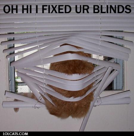 Oh hi i fixed ur blinds oh hi i fixed ur blinds cat meme cat planet cat planet