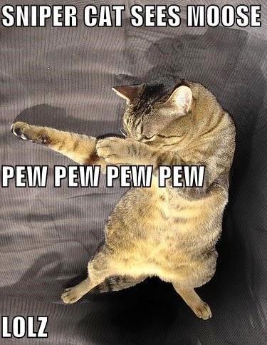 Sniper-Cat-Sees.jpg