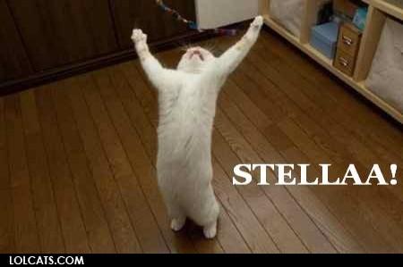 Stella stellaa cat meme cat planet cat planet