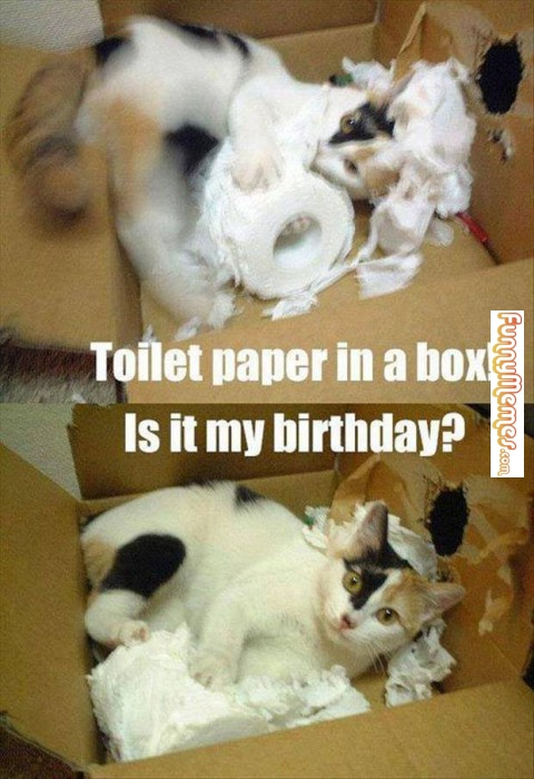 http://catplanet.org/wp-content/uploads/2014/04/Toilet-paer-in-a.jpg