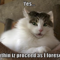 Yes Meme Cat The gallery for -->...