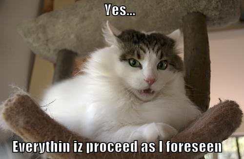 Yes Meme Cat Yes Everythin Cat Meme...