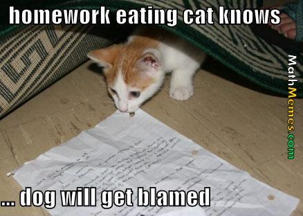 cat homework joke