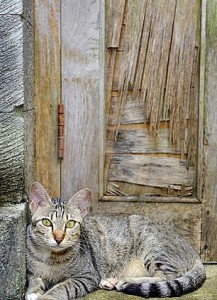 Cat Sitting Front Door