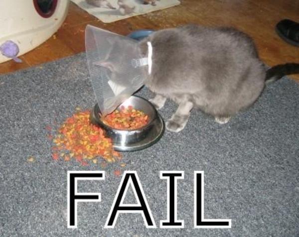 Fail cat meme cat planet cat planet for Www famil