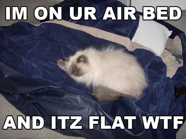 Im on ur air bed im on ur air bed cat meme cat planet cat planet