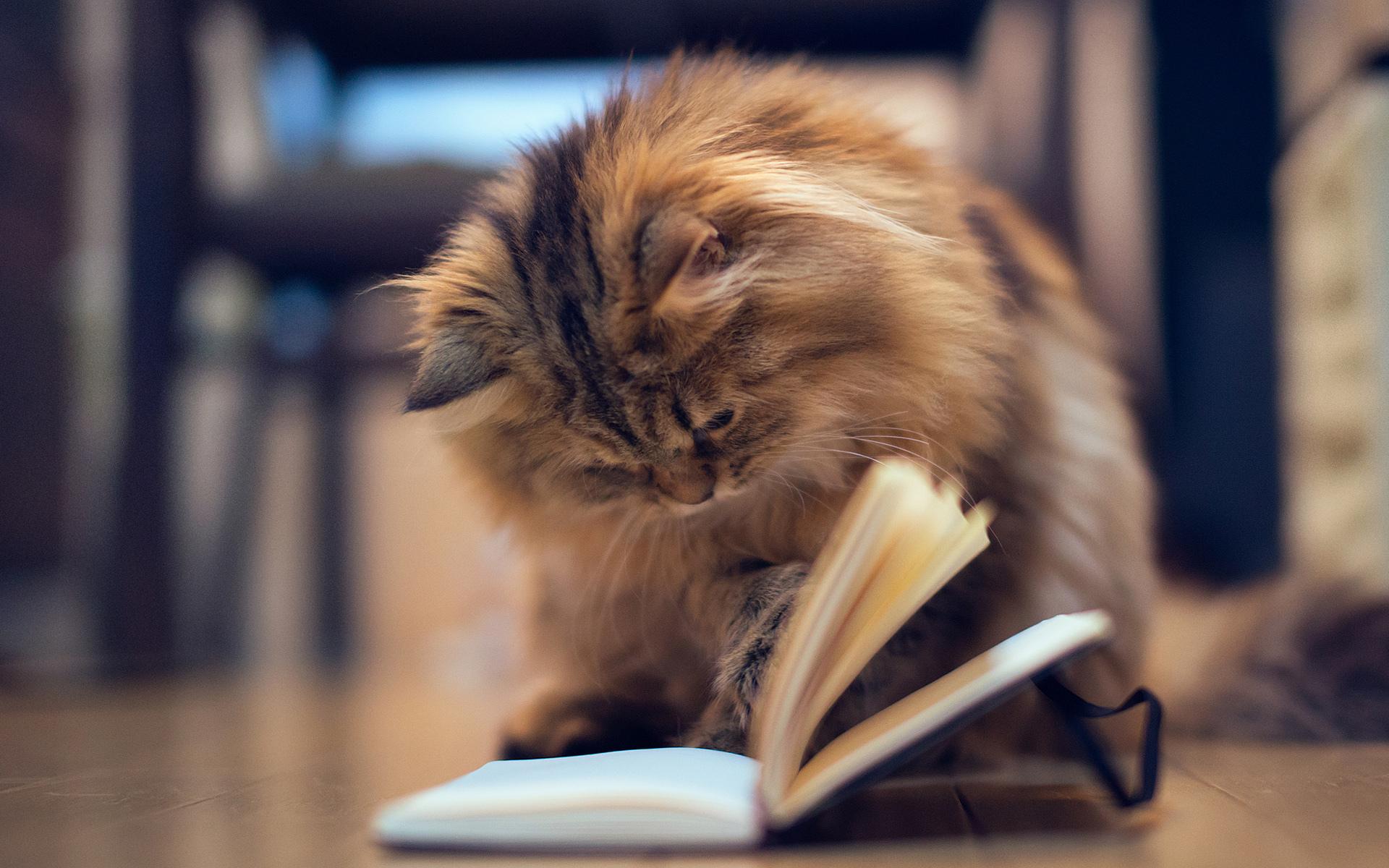 Pet Cat Assistant Librarian