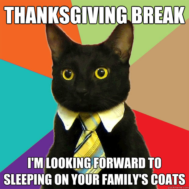 Thanksgiving Break Cat Meme Cat Planet Cat Planet