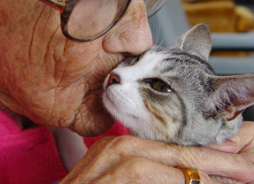 Cat lovers Treated to Feline Therapy in Paris