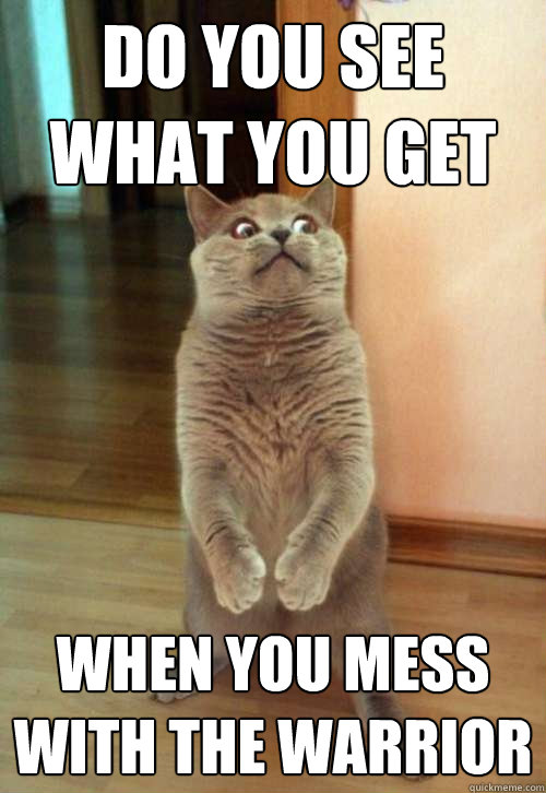 Warrior Cats Do Cats Laugh