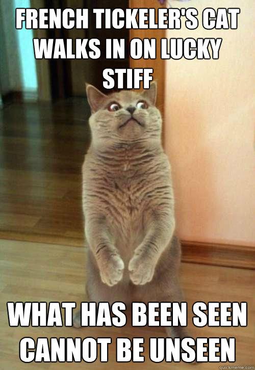French Tickeler's Cat Walks Cat Meme - Cat Planet | Cat Planet