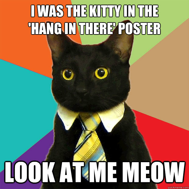 i was the kitty in the hang in there poster cat meme cat planet
