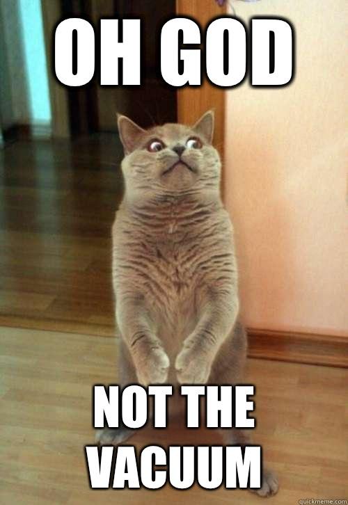 Oh God Not The Vacuum Cat Meme