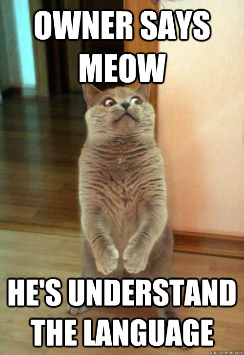 Owner says meow hes understand owner says meow cat meme cat planet cat planet,Meow Meme