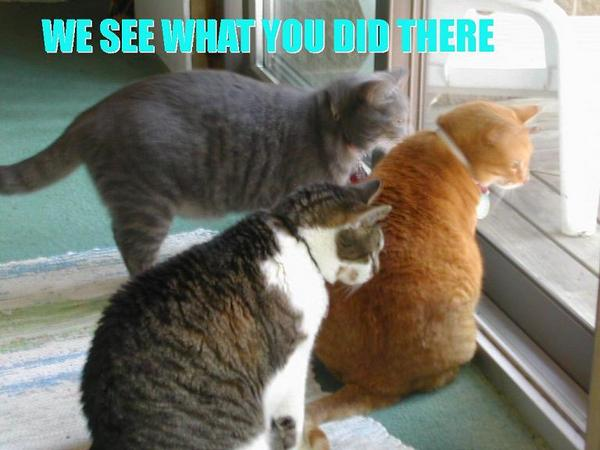We See What You Did There Cat Meme - Cat Planet | Cat Planet