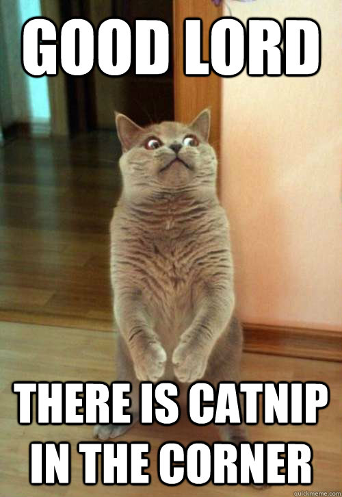 Good Lord There Is Catnip Cat Meme Cat Planet Cat Planet