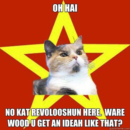 Yaaas Meme Cat images  hdimagelibcom