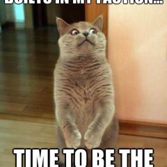 oh long johnson cat