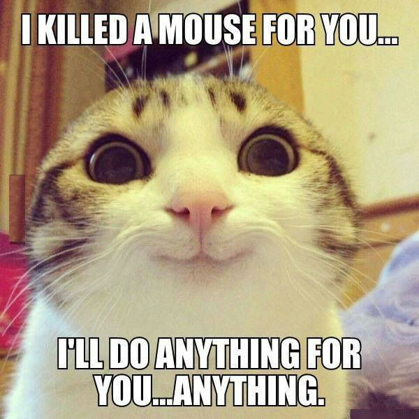 i killed a mouse for you cat meme cat planet cat planet